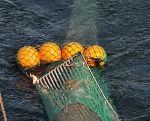 Räkfiske-med-Ferder-6